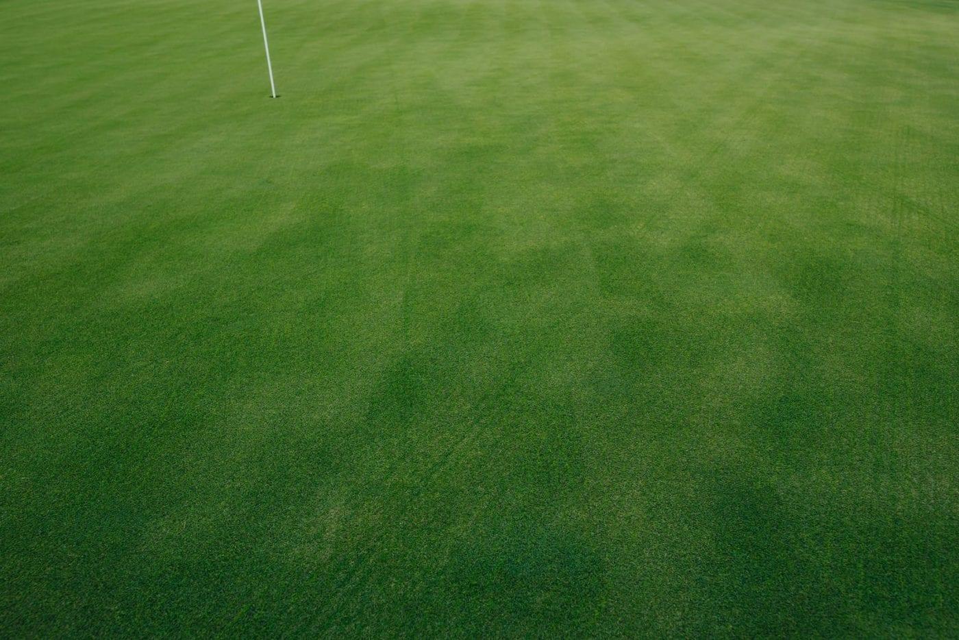 Golf Course Green Grass Texture, Closeup View